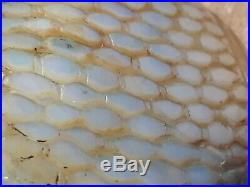 Imperial Ming Dynasty Museum Chinese Big Pearl Carved Fish Skin Sniff Bottles